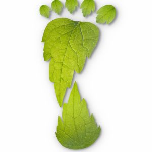 Smart food choices to reduce your carbon footprint